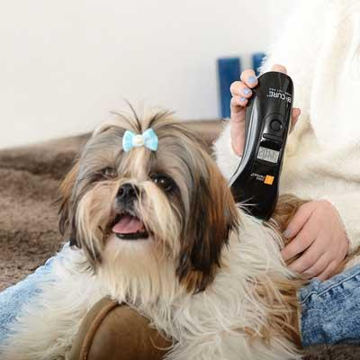 B-CURE Laser Vet PRO dog treatment