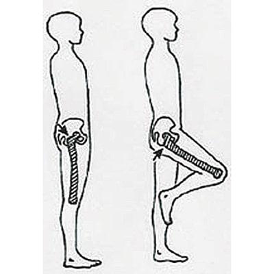 Image where to measure circumference around trochanter