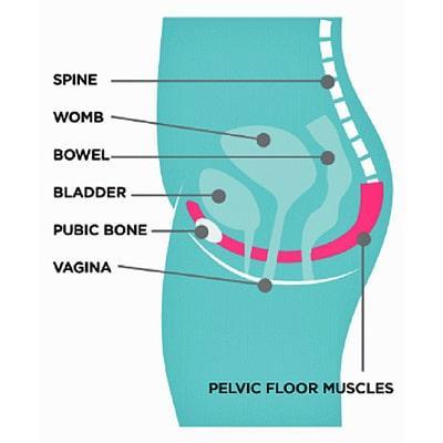 Pelvic floor
