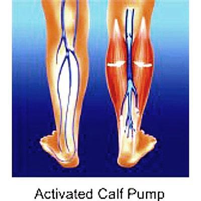 Image of calf pump muscles